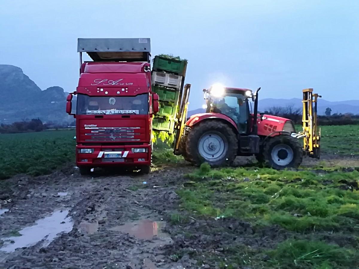 Магистральные тягачи заезжают прямо в поле, под трактор-погрузчик